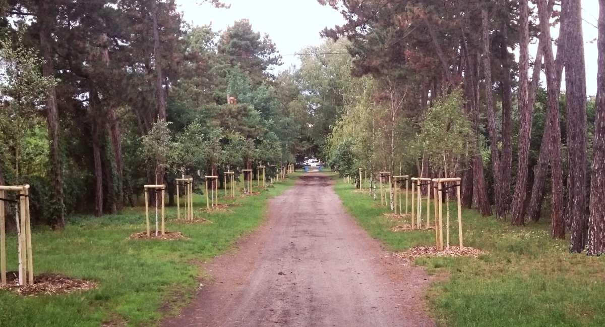30 nowych drzew na Kowalach – początek rewaloryzacji Osiedla-Ogrodu