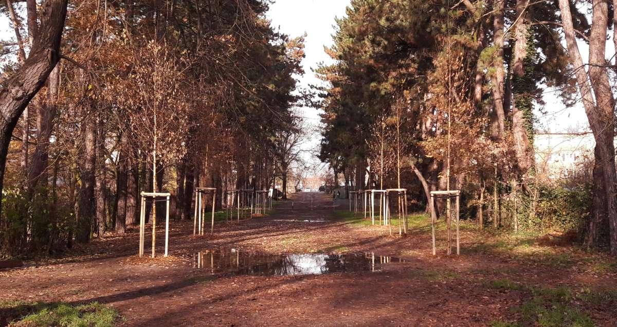 Posadziliśmy 55 nowych drzew na Kowalach