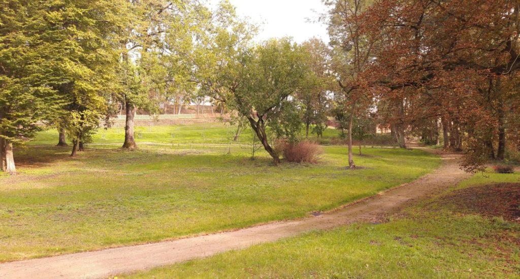 Zdjęcie: Rewaloryzacja Parku Dworskiego w Kłóbce – realizacja nasadzeń