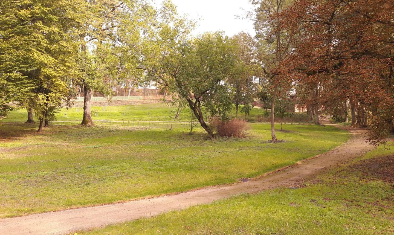 Rewaloryzacja Parku Dworskiego w Kłóbce – realizacja nasadzeń