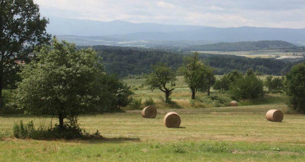 Zdjęcie: Kwerenda i studium krajobrazu kulturowego dla wsi Tarczyn (gm. Wleń)