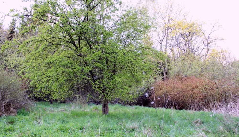 Projekt rewaloryzacji parku w Międzybłociu (gm Złotów)
