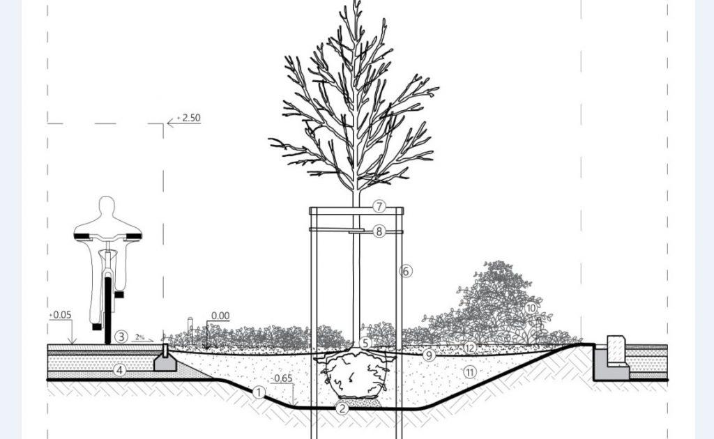 Zdjęcie: Standardy kształtowania zieleni Łodzi